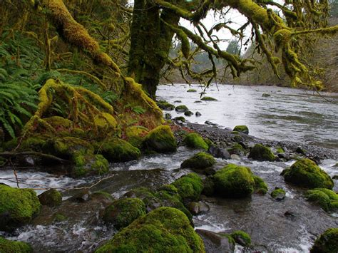 Sol Duc River In Washington Usa Flowing West To Northwest