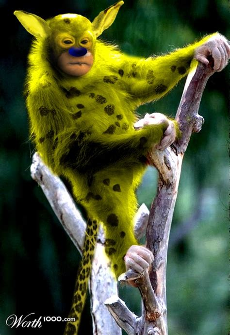 Most Entainment Guide: Marsupilami