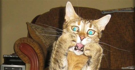 34 Hilarious Pics That Prove Cats Are the Most Dramatic